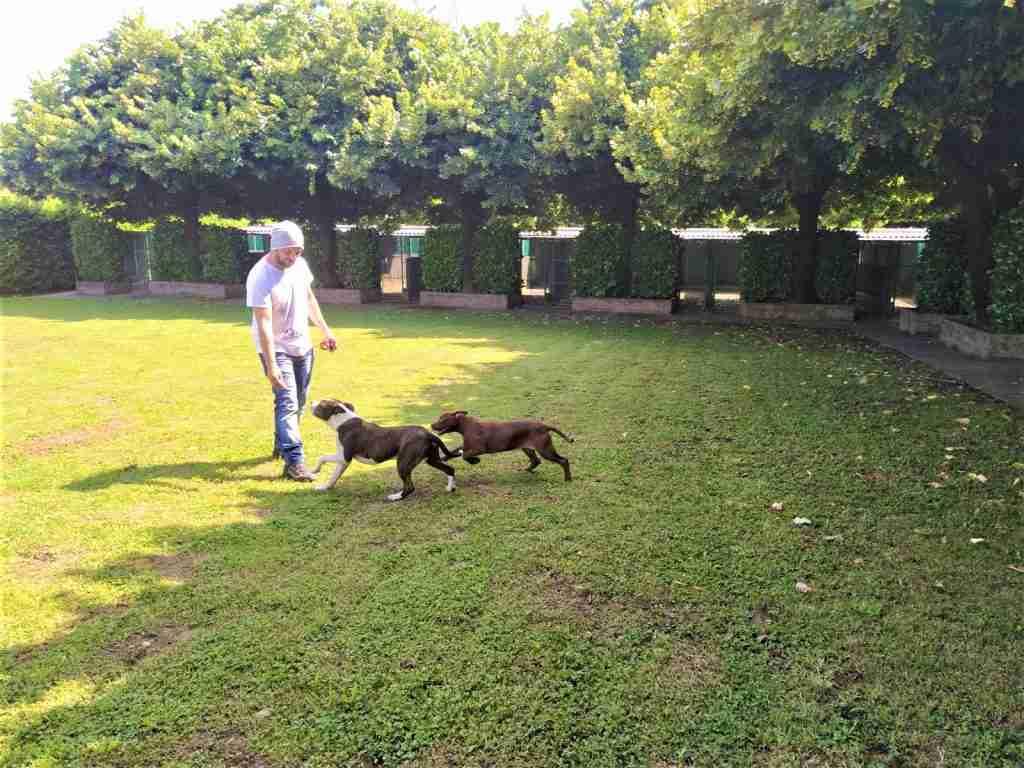 pensione per cani bergamo e provincia