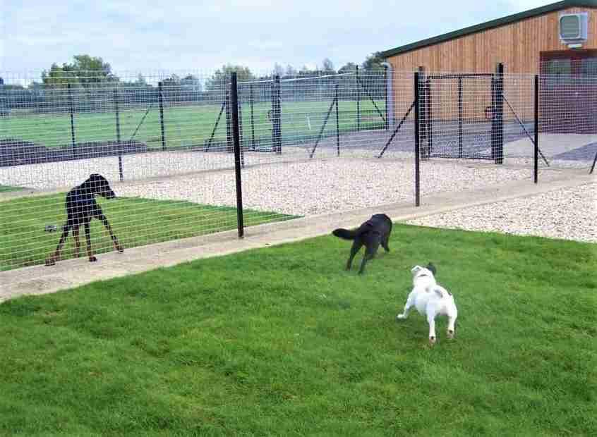 scegliere pensione per cani