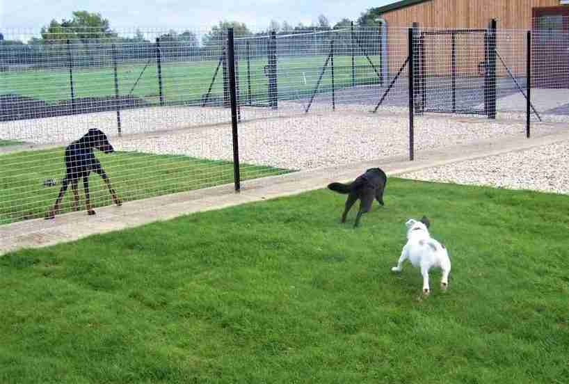 scegliere pensione cani