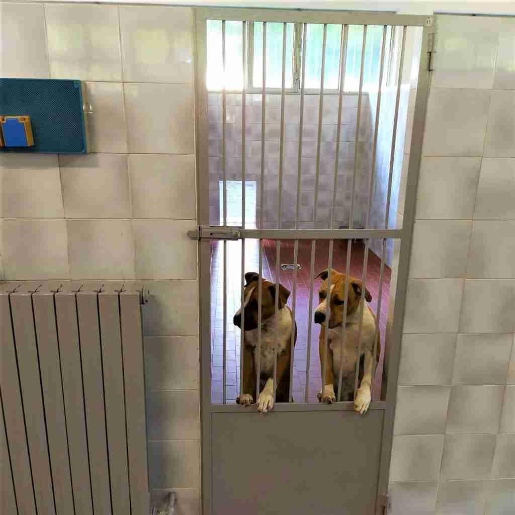 asilo cani
