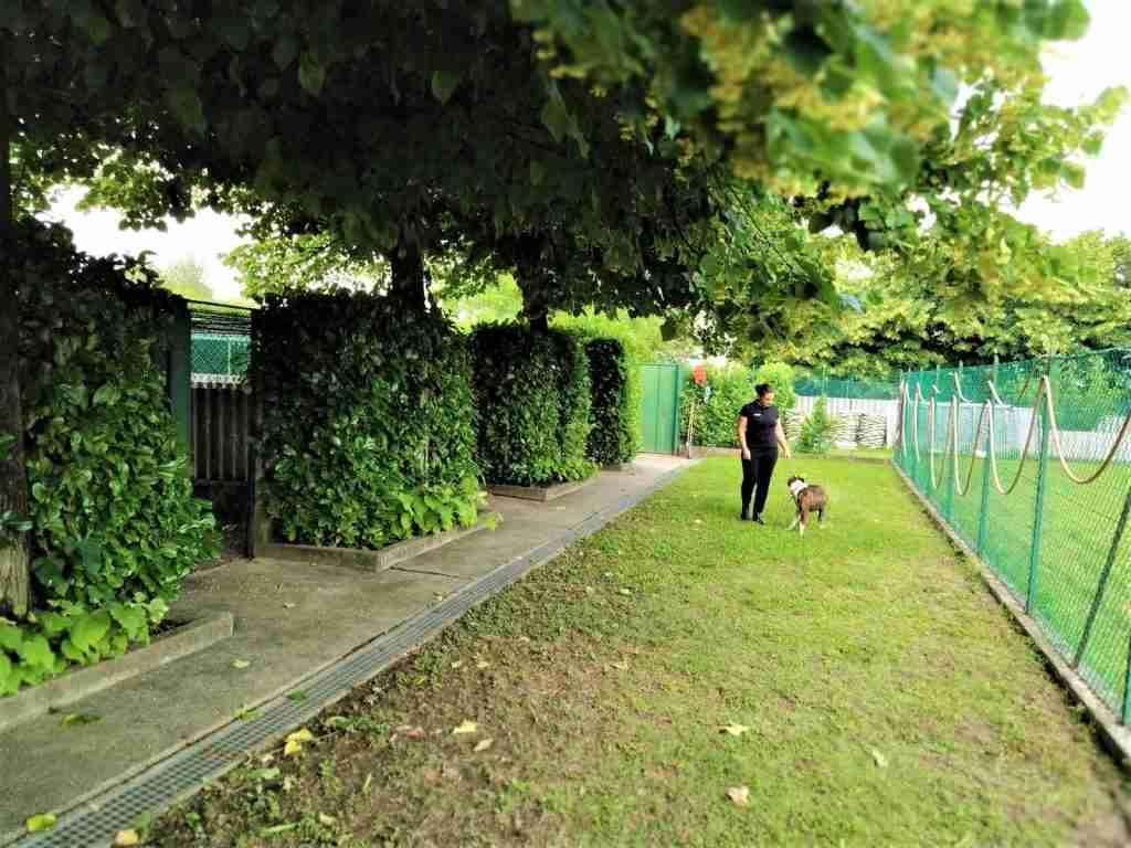 asilo per cani diurno