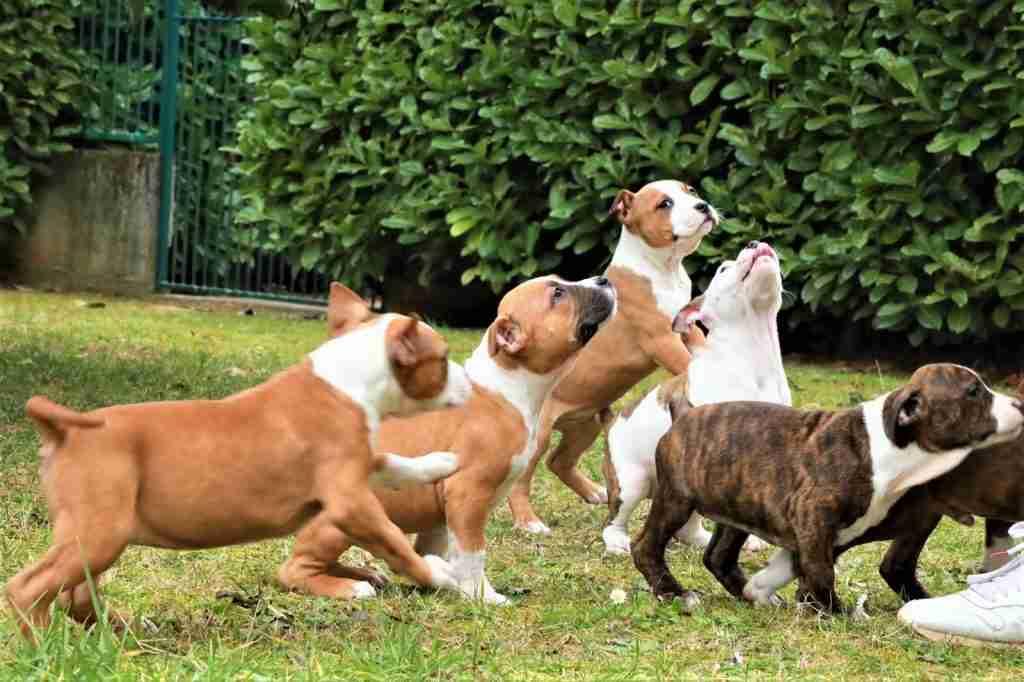asilo cani Lecco